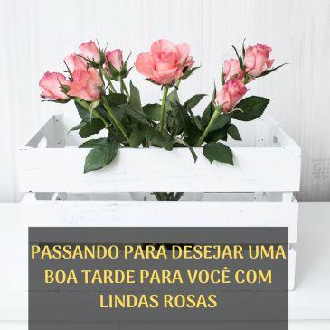 boa tarde com rosas