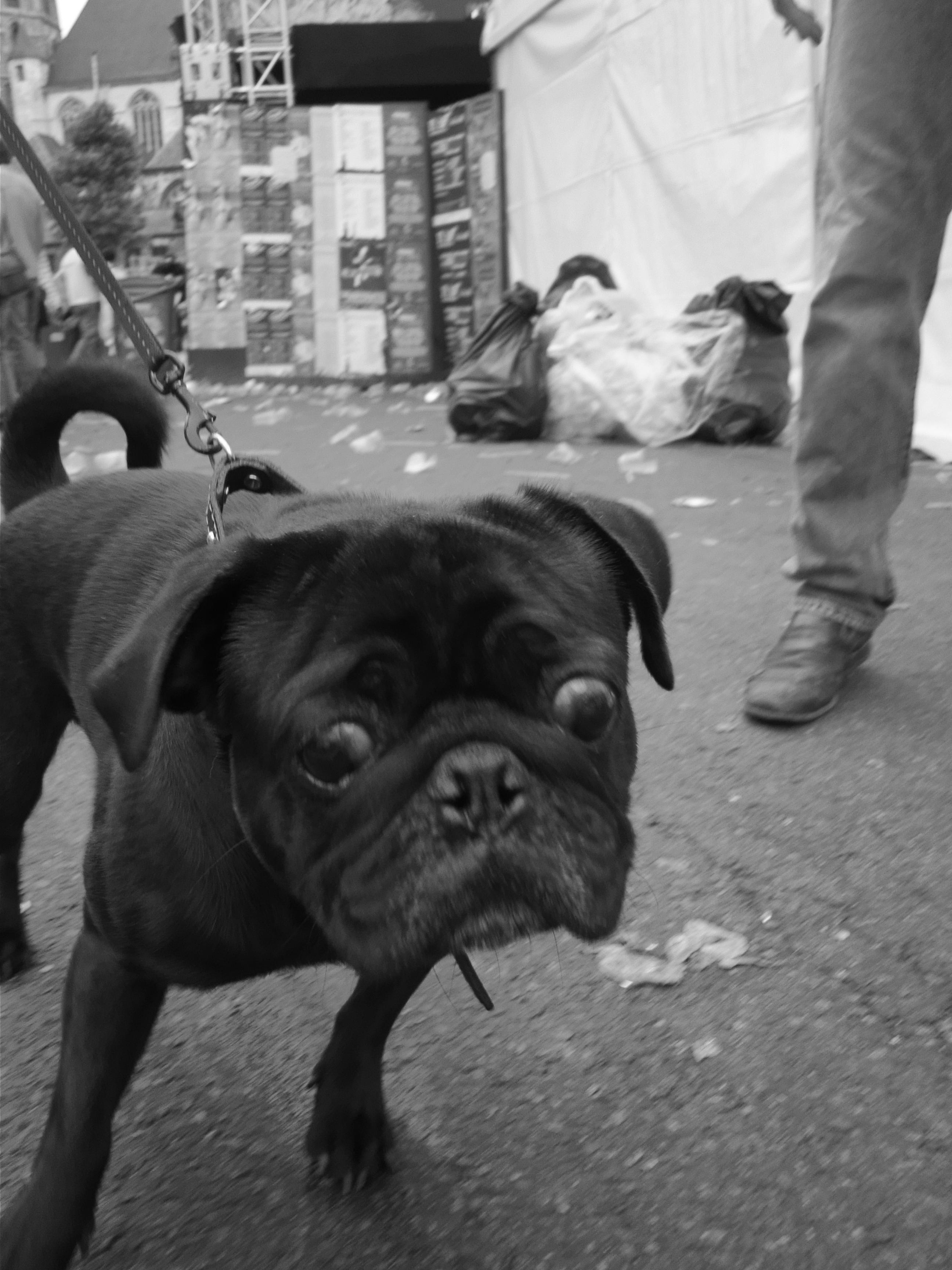 Des ochtends op de Vlasmarkt zien zelfs de honden er doorzopen uit.