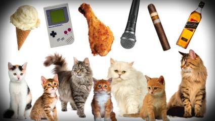 10 πεισματάρες γάτες που δεν μοιράζονται τα πράγματά τους (vids)