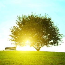 草原の木の木漏れ日