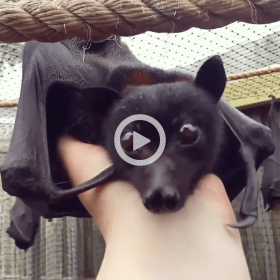 Adorable Bat Video