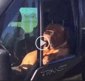 Dog Just Sitting in the Car