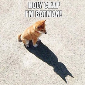 Holy Crap I am Batman Dog looking at Shadow