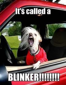 It's Called a blinker dog yelling from car meme