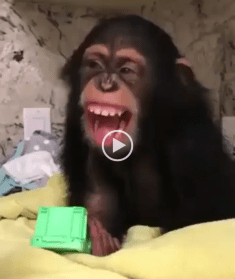 monkey hairdryer video