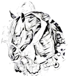 Mentale Pferdepower