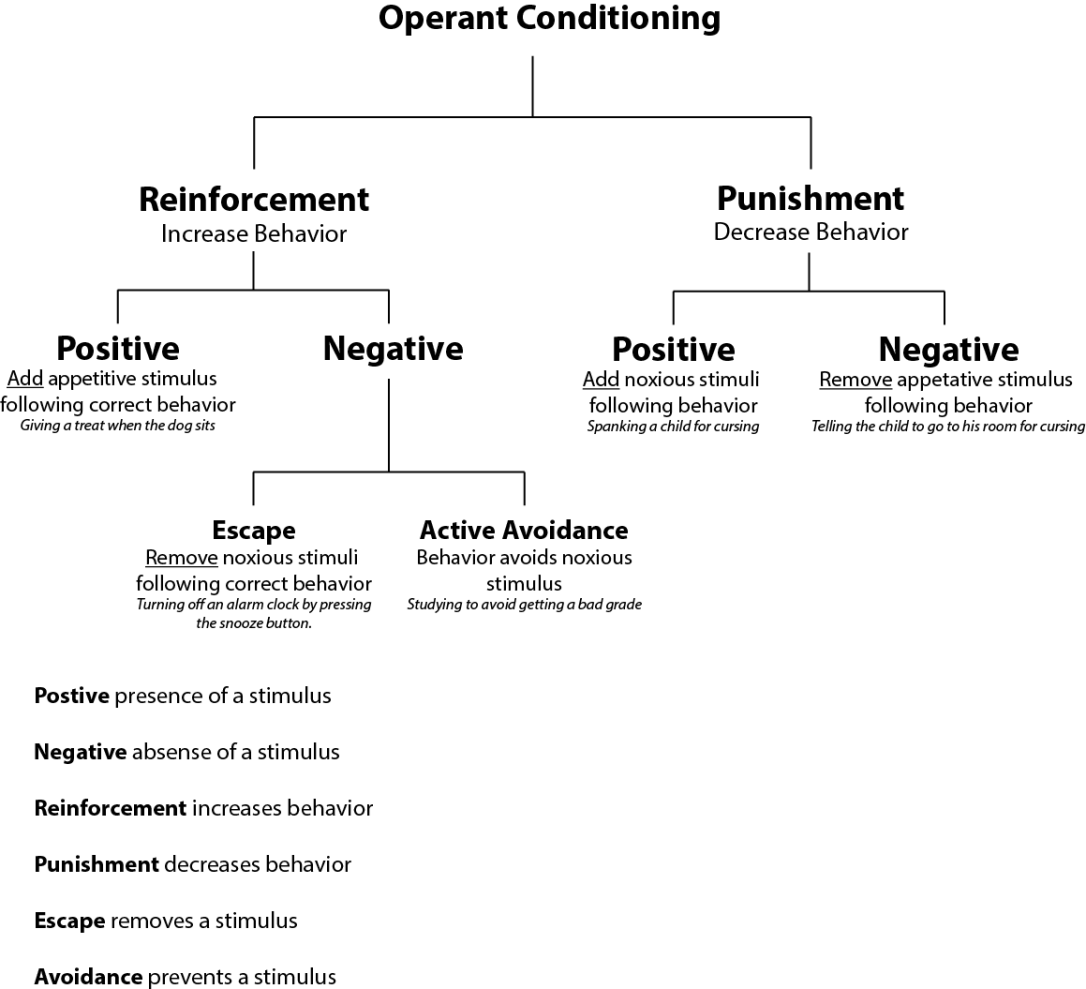 diagram of operant conditioning reinforcement and punishment