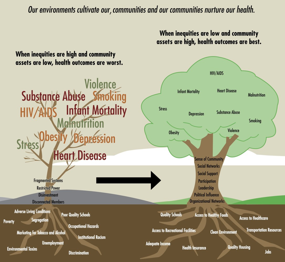 Tree diagram showing the effects of inequities in the social determinants of health