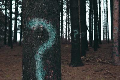 木に書かれたクエスチョンマーク