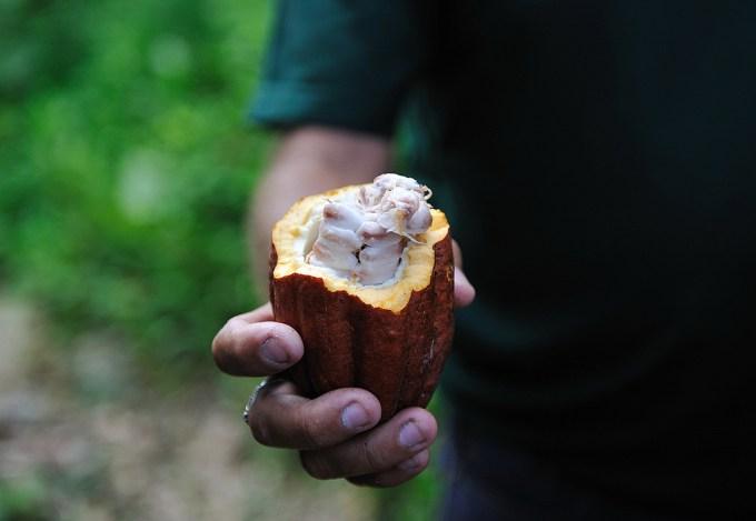 mano cacao
