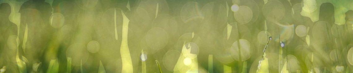 """La mediumnidad es la capacidad de sentir la """"vida"""" de los espíritus, el poder contactar con la historia de sus experiencias cuando estaban encarnados, el poder sentir su presencia, su paz, sus estados de consciencia. El mero hecho de ser diferente te hace especial. Simplemente tienes que aprender a ordenar los mensajes, las sensaciones y entrenar tu cerebro para recibir mejor la información. La mediumnidad es una capacidad con la que nacemos y a través de técnicas terrenales como ejercicios de instalación visual, tecnología y meditaciones podemos ordenar y obtener mensajes más claros y productivos. En España tenemos la dificultad de encontrar médiums que no estén sujetos a religiones y que puedan proporcionar una enseñanza seria y leal. Mente psíquica os proporciona diferentes programas de entrenamiento cerebral donde podremos definir que tipo de mediumnidad tenemos, como desarrollarla y como emplearla. Estudios, investigaciones de sucesos, trabajo personal con nuestras otras existencias, la historia de nuestros difuntos contadas por ellos mismos, la autoayuda para la fluidez corporal y mental, son algunos de los temas que trataremos en nuestras formaciones. Si quieres más información sobre nuestras actividades, puedes escribirnos a info@mentepsiquica.es. Estaremos encantados de atenderte. Estamos en Huelva (España)."""