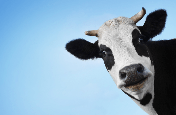 Why Should Your Prospect Buy the Cow When You're Giving Away the Milk for Free?