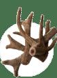 Antlers (Панты марала)