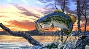 Arti Mimpi Ikan: 10 Tafsir Mimpi seputar Ikan