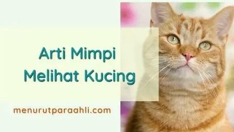 Mimpi Melihat Kucing Oranye