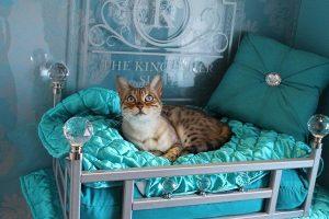 Sebuah hotel eksklusif untuk kucing telah dibuka di kota Pavia, Italia.