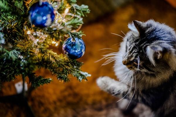 kucing dan pohon natal