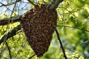 Swarm Help