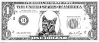 KittenDollar