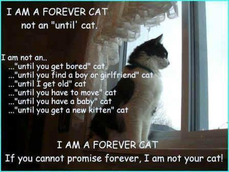 ForeverCat2