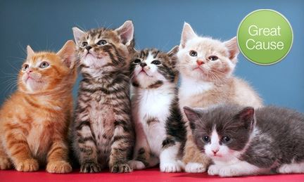 Make a donation to help save kitties like these