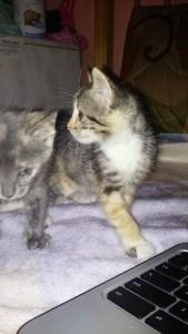 rocios-kittens-2