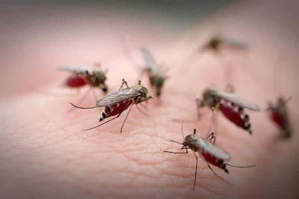 Bệnh sốt xuất huyết nguy hiểm
