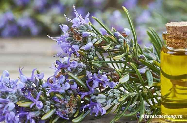 Tinh dầu hương thảo giúp ngăn ngừa rụng tóc