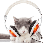 cat music love feature