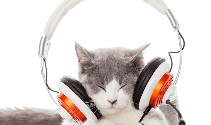cat music love feature