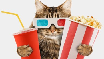movie cat quiz feature