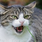 cat psychopath quiz feature