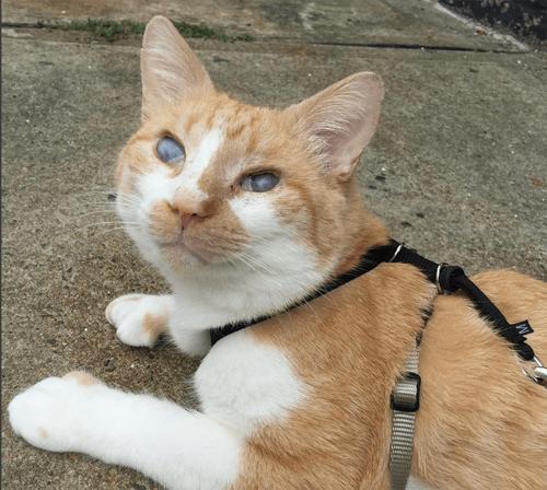 blind deaf cat