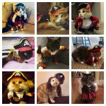 pirate cats feature
