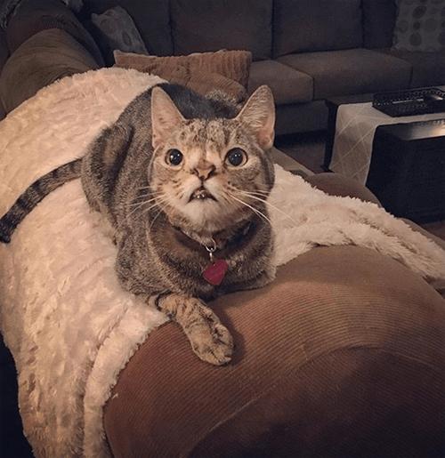 chromosomal abnormality cat