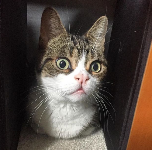 ch cat with cleft lip