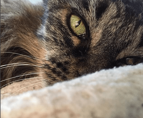 one eared senior cat inoperable brain tumor