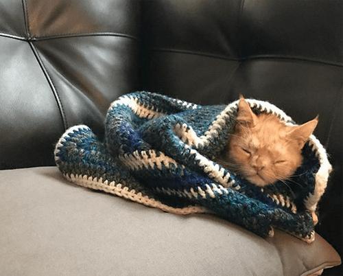 smush chromosomal abnormality cat