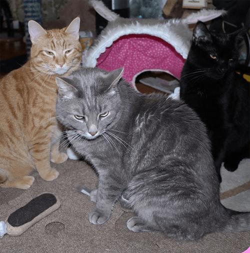 senior cat with epilepsy