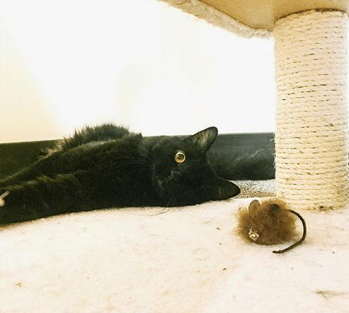 black one eyed emotional support cat