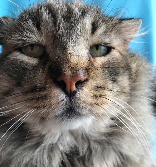 former street cat fiv positive
