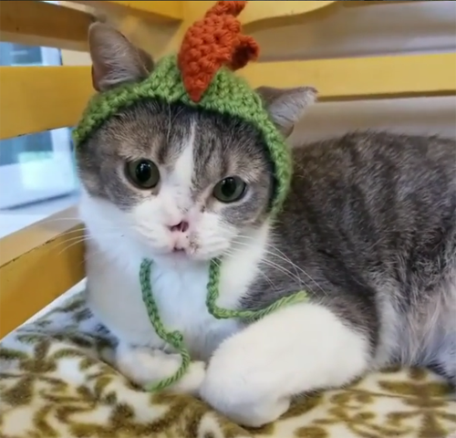 cute cat without a nose