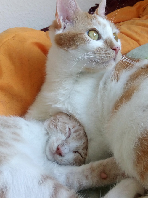 ginger and white cat abuse survivor