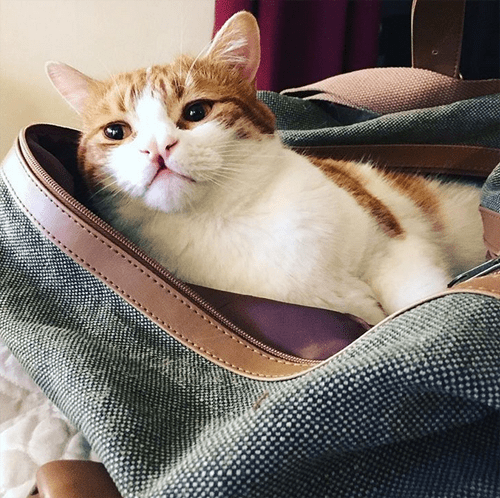ginger white cat with cleft palate cleft lip