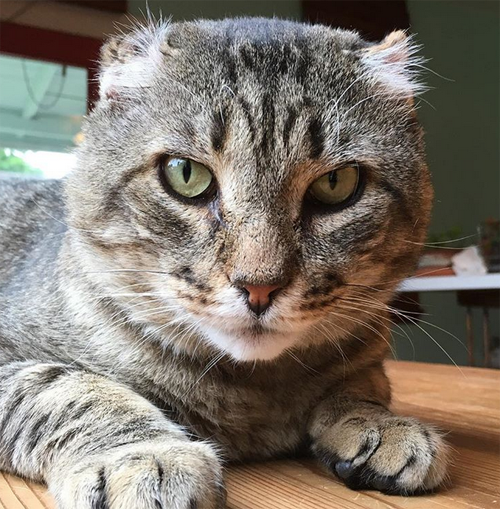 former street cat with FIV and diabetes