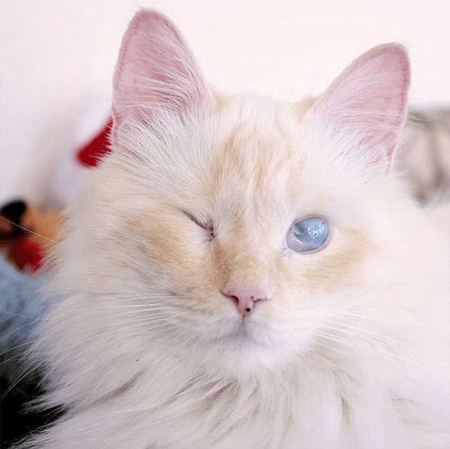 blind rescue cat with epilepsy