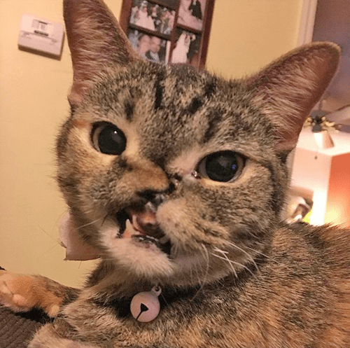 rescue cat who was shot in the face