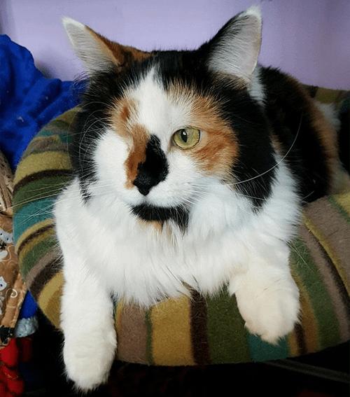 rescue cats with cerebellar hypoplasia