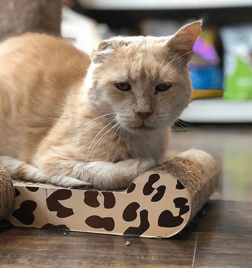 fiv positive former street cat