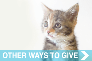 meow co - donate - OTHER